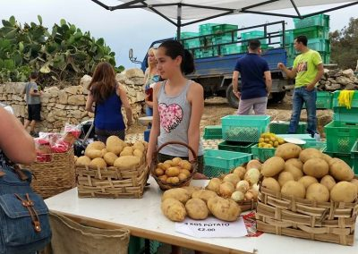 potato-feast-qrendi agricultural feast