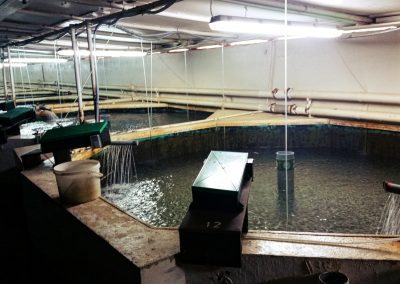 Marine aquaculture at Fort Saint Lucian Malta