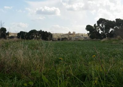view-hal-milleri