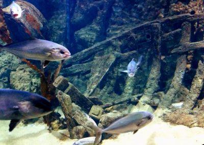 aquarium17