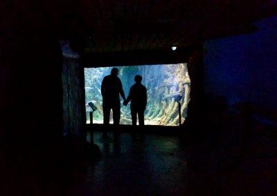 aquarium23