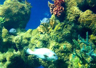 aquarium27