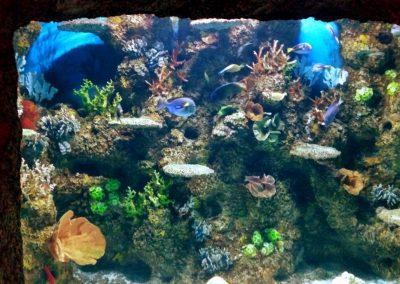 aquarium28