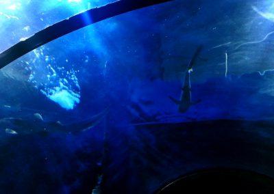 aquarium29