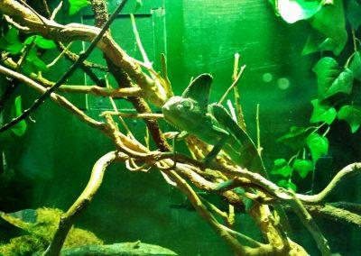 aquarium30