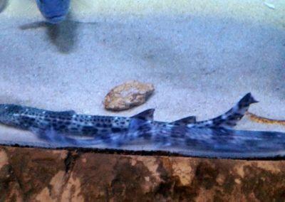 aquarium33