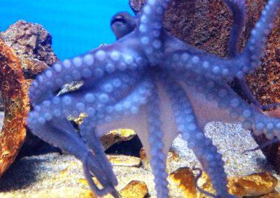 aquarium38