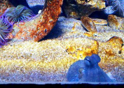 aquarium39