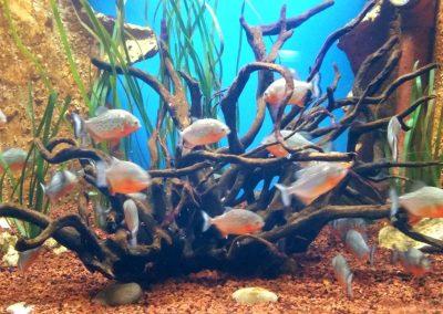 aquarium40