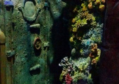 aquarium41