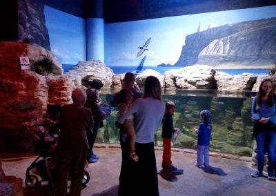aquarium43