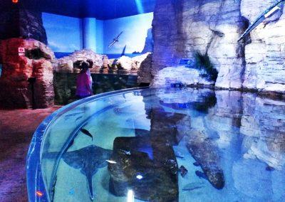aquarium45