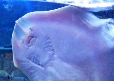 aquarium48