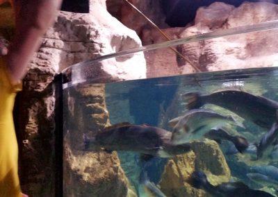 aquarium51