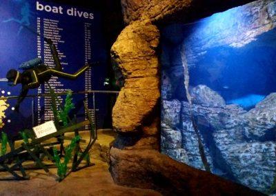 aquarium58