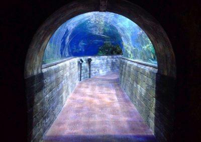 aquarium59
