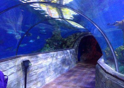 aquarium60