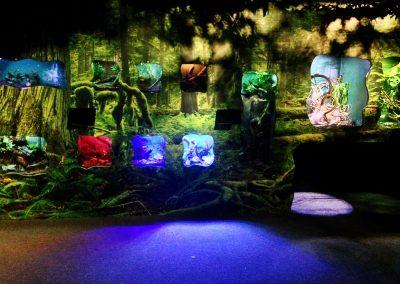 aquarium61