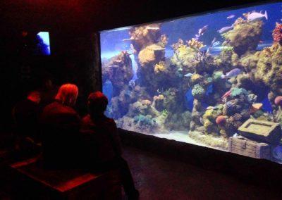 aquarium62