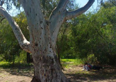 kennedy grove15