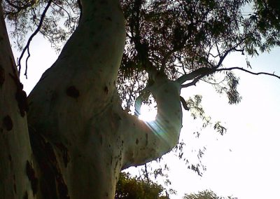 kennedy grove26