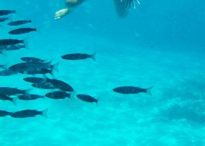 sea adventure blue lagoon