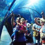 Celebrating Malta National Aquarium 4th Birthday with Nicky